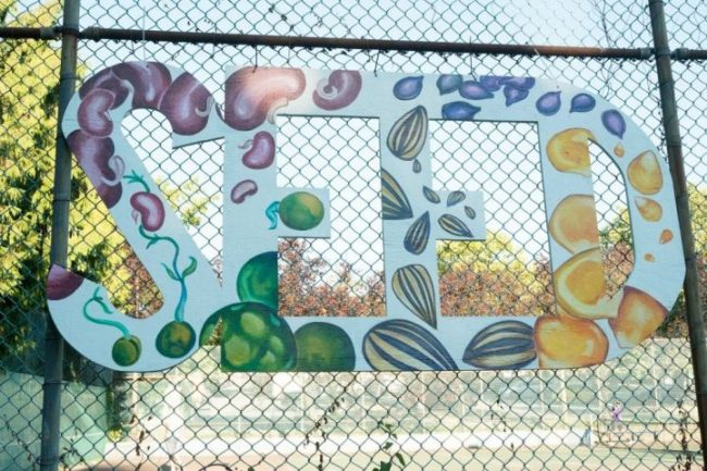 SEED (various seeds painted on large letters)
