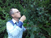 An image of Ian picking berries