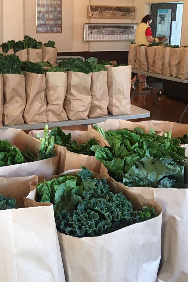 An indoor image of many paper bags filled with veggies like kale and leeks