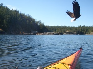 An eagle sees us fishing by Lund/Desolation Sound