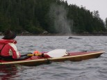 Accompanied by a humpback whale in Work Channel in north of Prince Rupert right by the Alaskan border