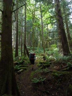 Hiking through the lush west coast temperate rainforest