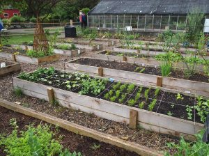 urban farming vancouver maplewood farm