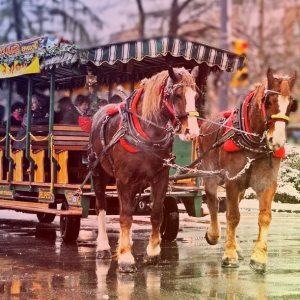 carriage rides lumiere