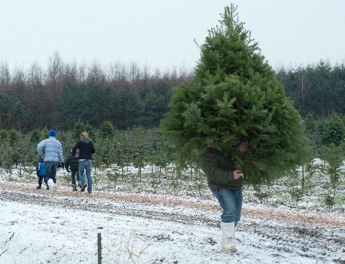 H & M Christmas Tree Farm - where to get Christmas trees in Vancouver