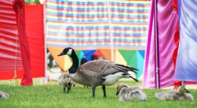 Children's Festival Colours and Geese
