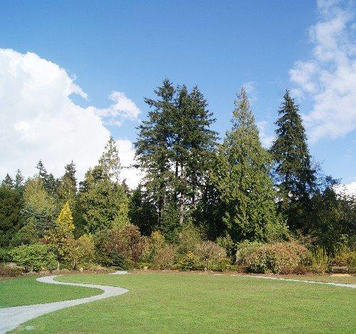 UBC Botanical Garden in April