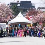 Cherry Blossoms and Vaisakhi Parades