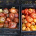 Fresh Farm Tomatoes at Market
