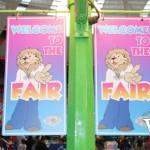 PlayDome Fair Signs