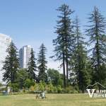 Holland Park Trees and Surrey Towers
