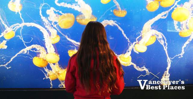 Girl with Vancouver Aquarium Jelly Fish