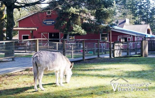 Maplewood Farm with Donkey