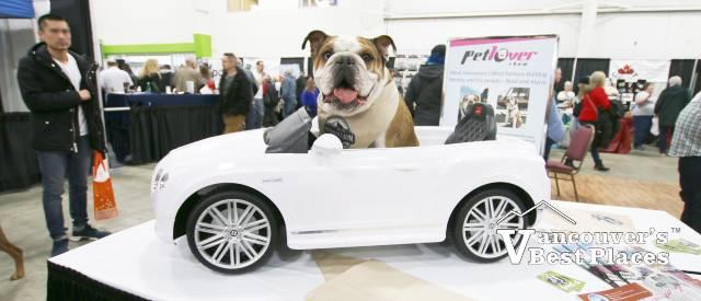 Bentley the Bulldog at Pet Lover Show
