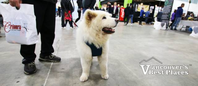 Dog at Abbotsford Pet Lover Show