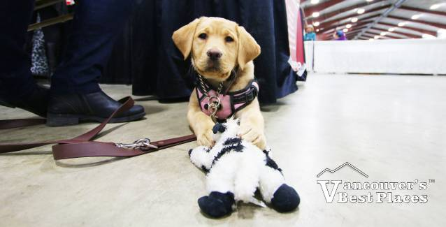 Puppy at Pet Lover Show