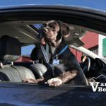 SuperDog in Car at the PNE Fair