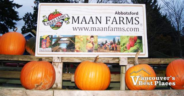 Maan Farms Sign and Pumpkins
