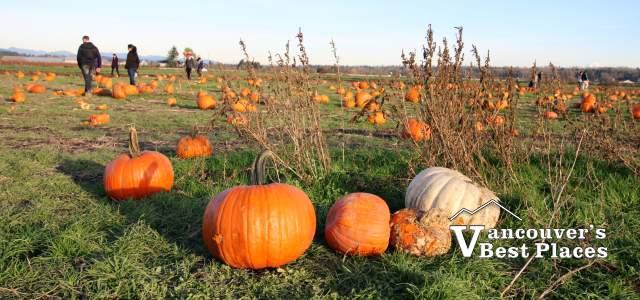 Rondriso Farms Pumpkin Patch