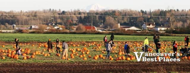 Rondriso Pumpkin Farm in Surrey