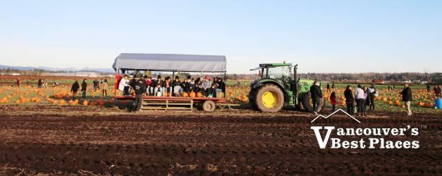 Rondriso Pumpkin Patch Tractor