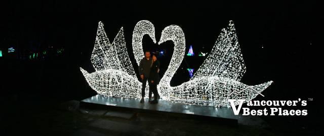 Love Swans at Aurora Winter Festival