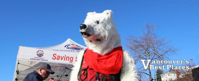 Polar Bear Plunge Mascot in White Rock