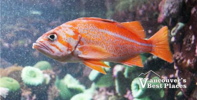 Vancouver Aquarium At Stanley Park Vancouver S Best Places