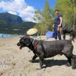 Dog at Kilby Beach