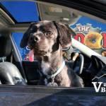 Dog in Car and Mini Donut Vendor at PNE