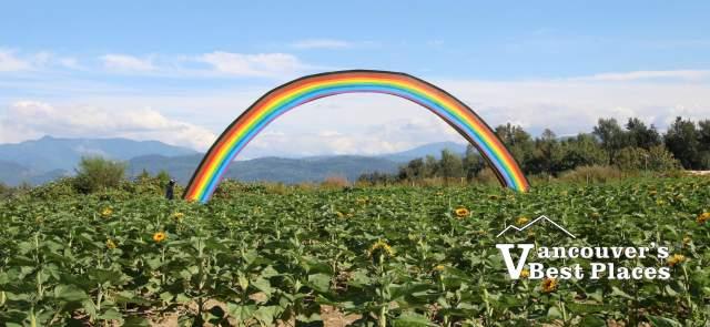 Rainbow in Maan Farms Sunflower Field