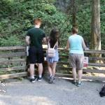 Kanaka Creek Near Cliff Falls