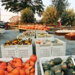Maan Farms Pumpkin Produce
