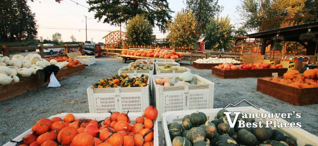 Maan Farms Pumpkin Produce