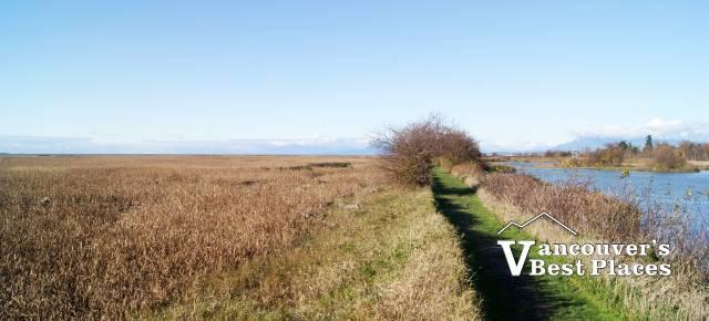 Reifel Bird Sanctuary Marsh