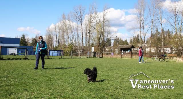 Albion Fairgrounds Dog Park