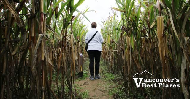 Corn Maze at Petey's Pumpkin Patch