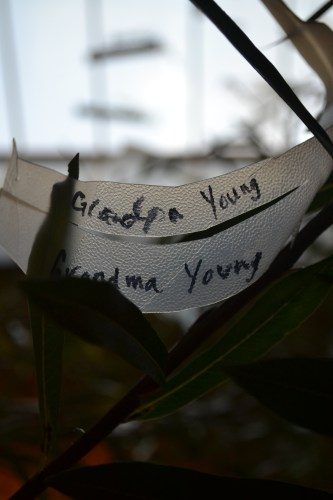 Written remembrance of Grandpa Young and Grandma Young-tucked in willows