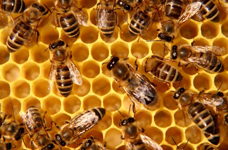 Bees have something to say - July's Earth Spirit Circle