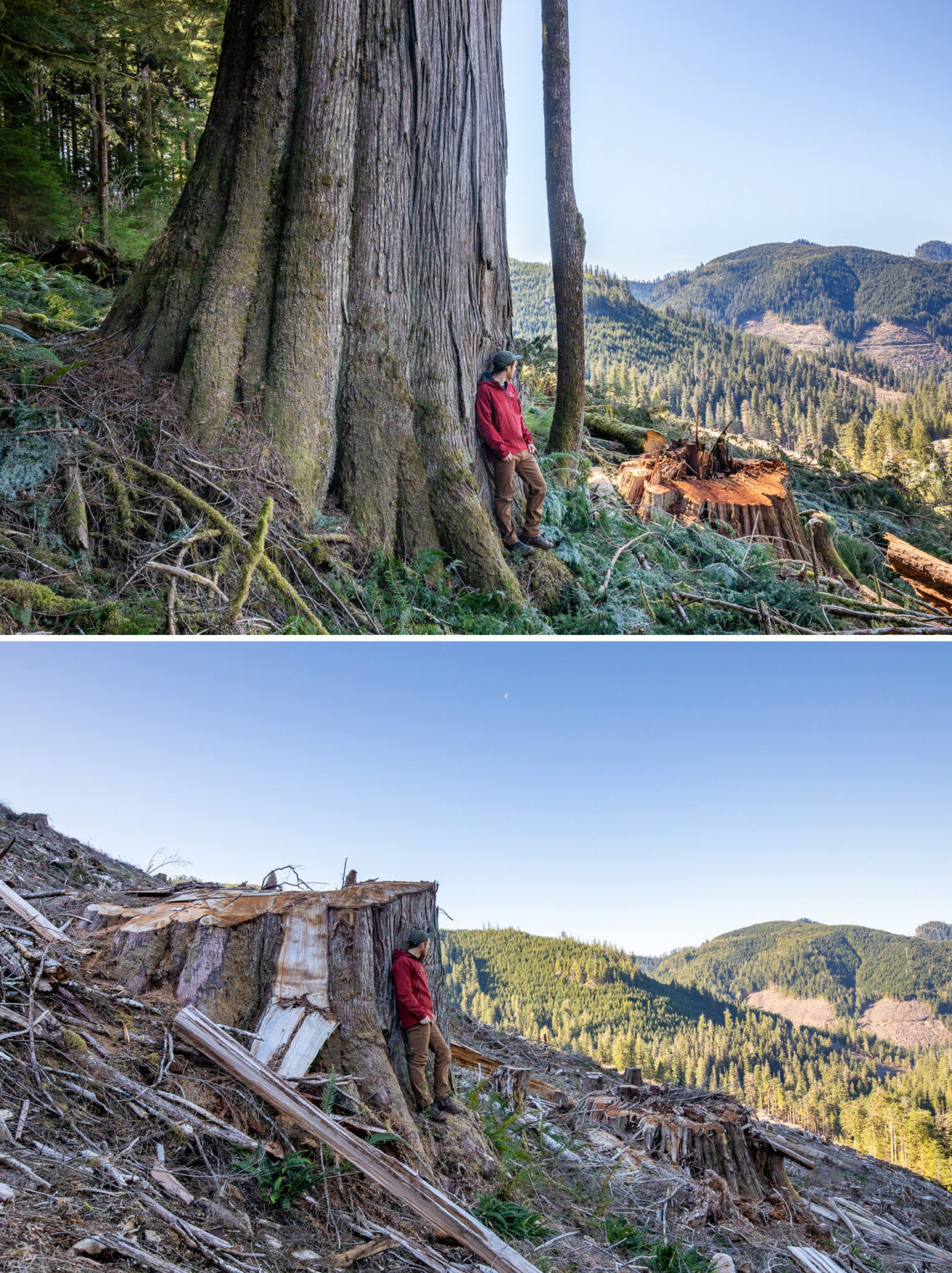Photo: Caycuse watershed before and after clearcut