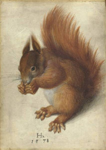 Watercolour of a red squirrel