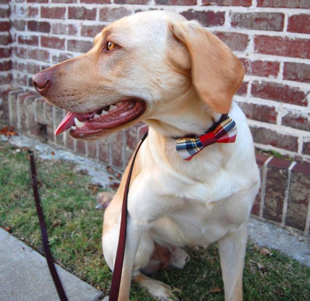 1-lucky-pitbull-awareness-puppy-milk-and-honey-boutique-plaid-vest-blog-vandi-fair-lauren-vandiver