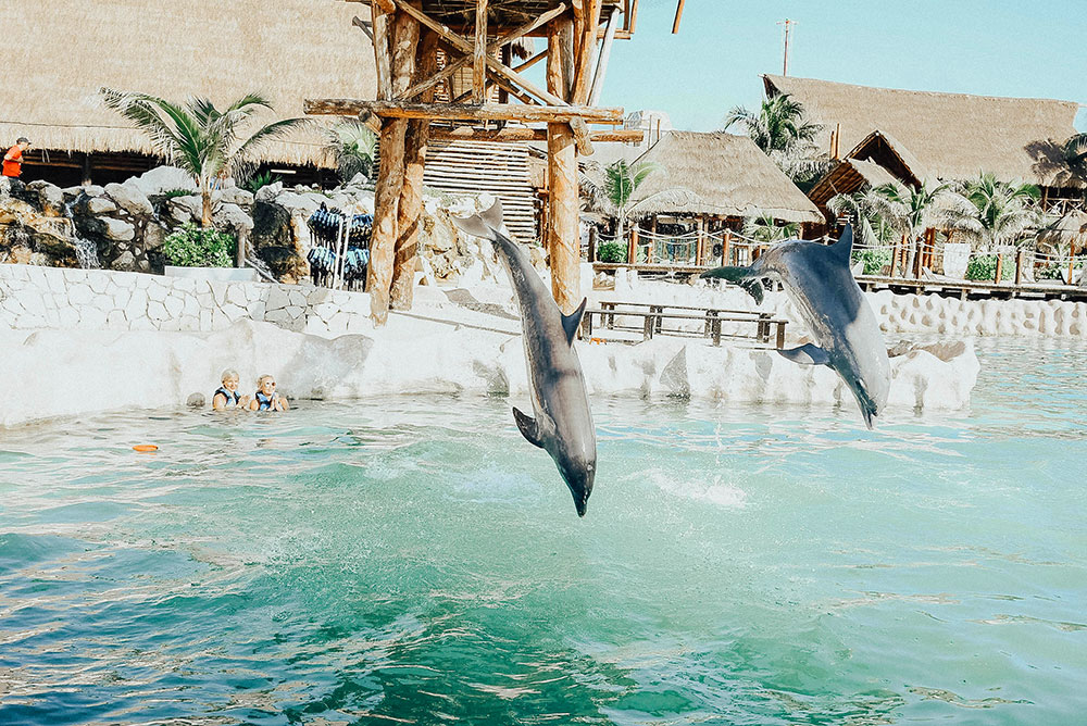 costa maya swim with dolphins