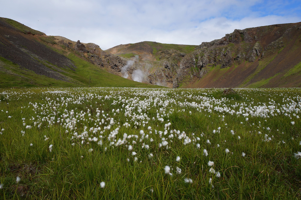 iceland_small_3569