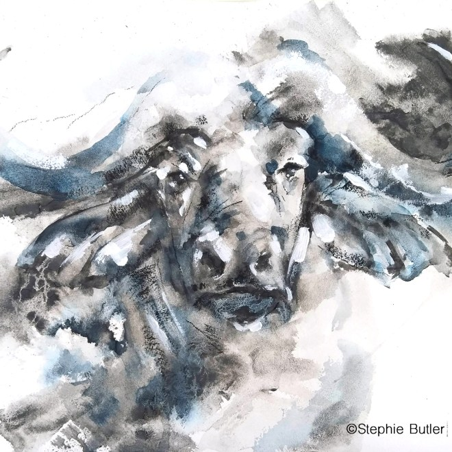 African Buffalo by Stephie Butler