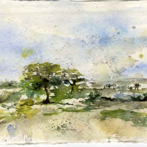 Watercolour on Khadi paper. Cooled Down from Summer's Heat by Vandy Massey. Watercolour on Khadi Paper. 21 x 15cm