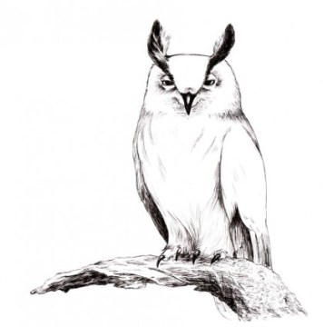 eagleowl_sketch