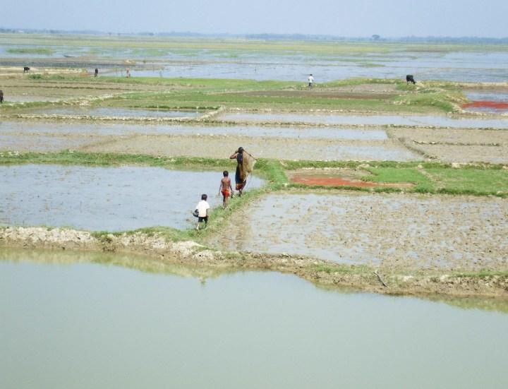 Flooding, Bangladesh