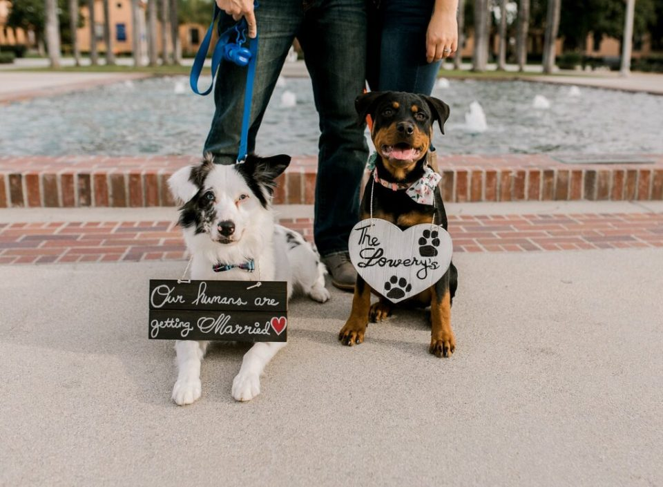 puppies at engagement session san diego