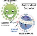 Antioxidants_Wellness_-Nutrition_Chiropractic_prevention-300x285 Bronzeamento, de dentro para fora!